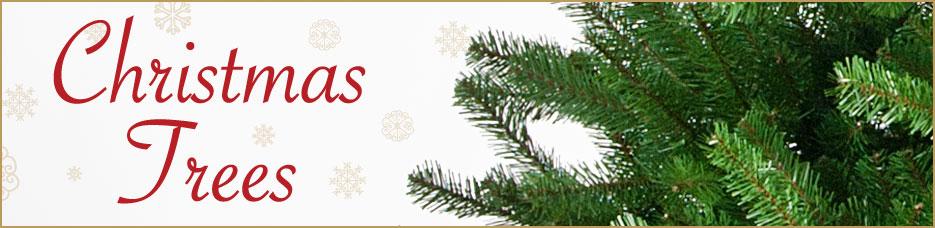 christmas_trees_banner