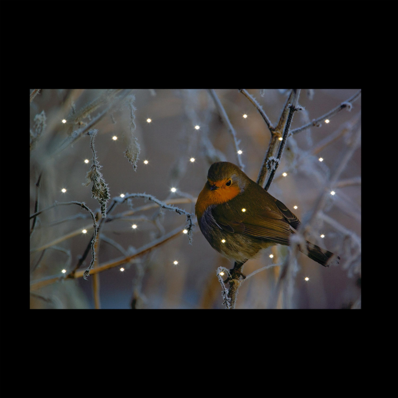 Christmas Trees and Lights 'Christmas Robin' Illuminated Canvas with Vibration Sensor